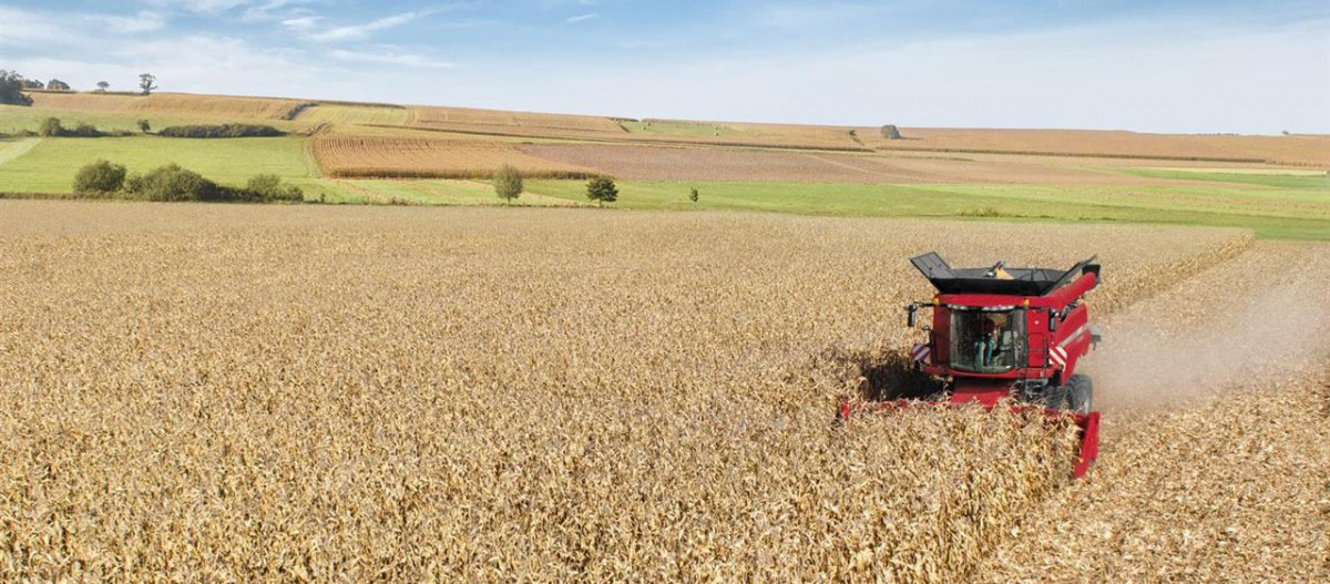 CASE IH Corn headers Betakarító gép